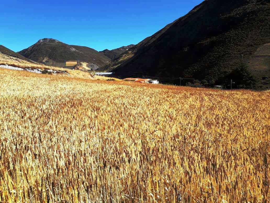 Terreno sector La Asomada-Apartadero